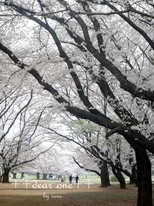 春の公園150428_1