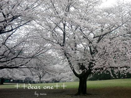 春の公園150428_2