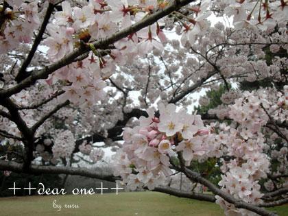 春の公園150428_3