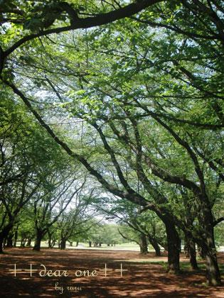 春の公園150428_4