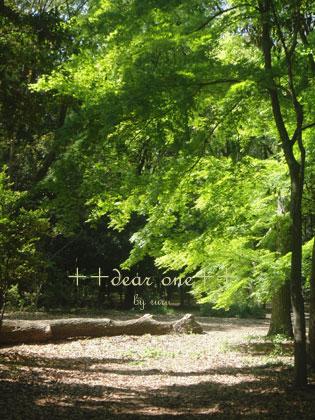春の公園150428_5