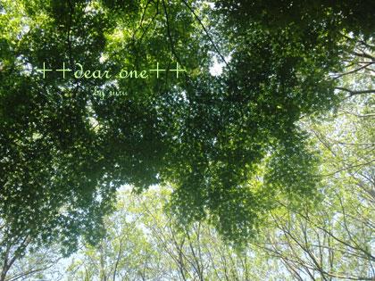 春の公園150428_6