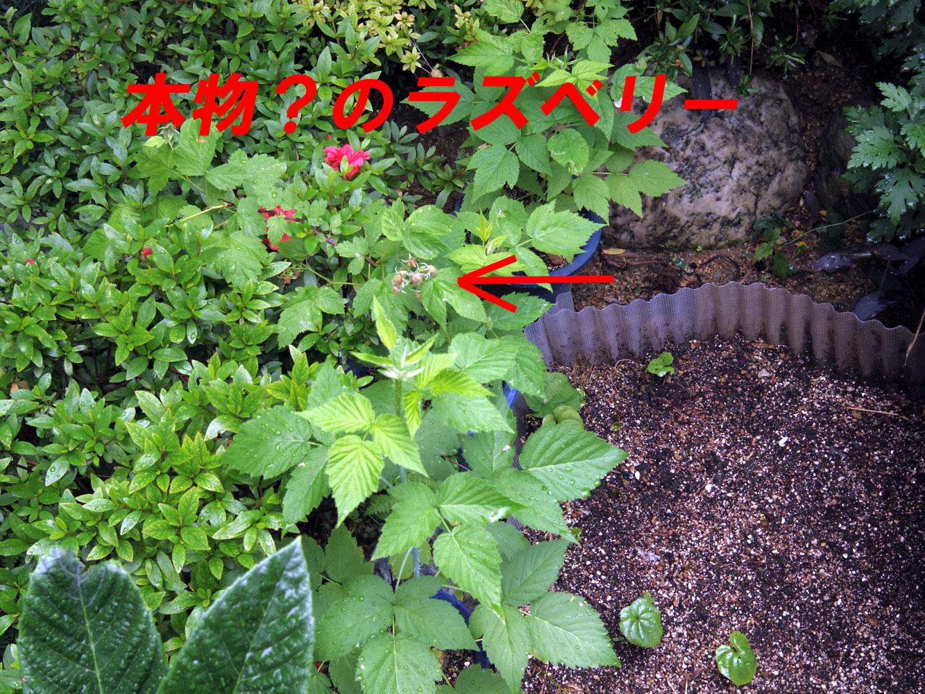 raspberry201505293.jpg