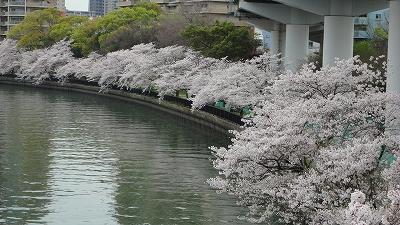 hanami0404_2015_1.jpg