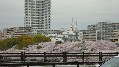hanami0404_2015_2.jpg