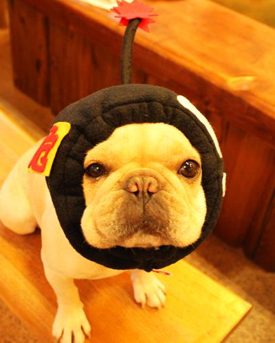爆弾犬ヅラ