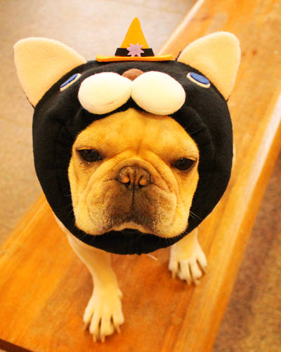 黒猫犬ヅラ