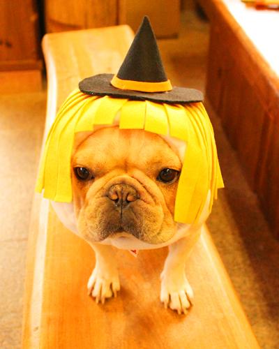 魔女犬ヅラ
