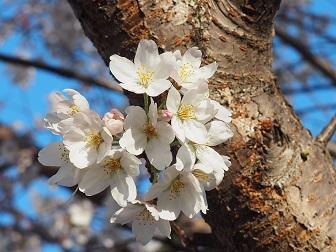 4-1桜2f