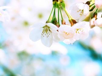 4-1桜3f