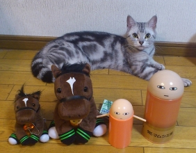 猫 ジャスタウェイ