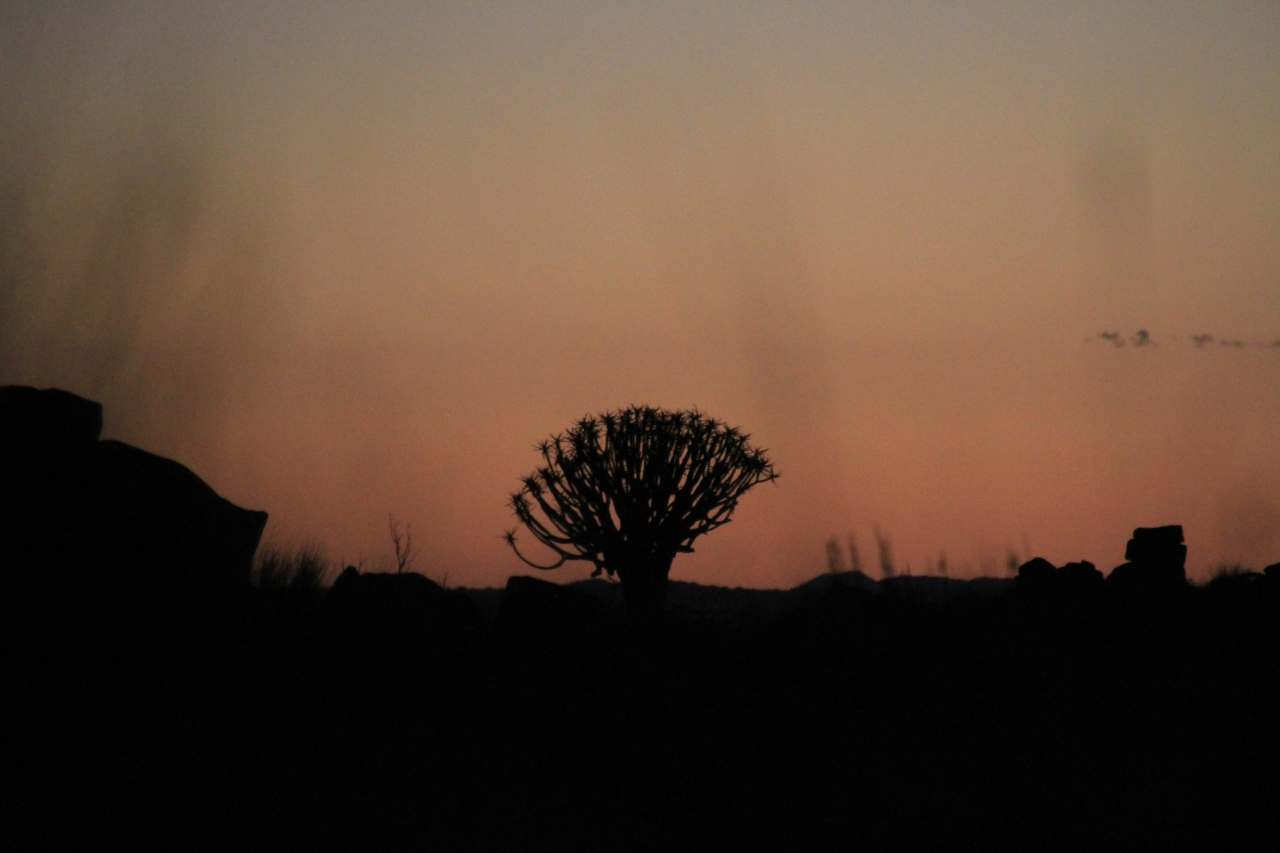 アフリカで見つけた