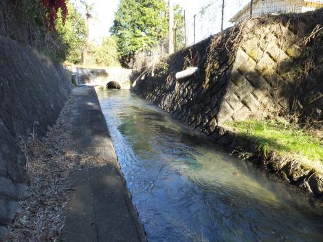 荻窪用水・桜田隧道出口より下流を望む