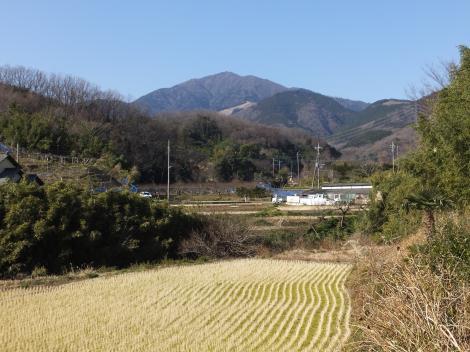 鈴川沿いの田んぼと大山・伊勢原消防署西分署付近