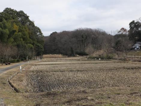 座間谷戸山公園・谷戸田