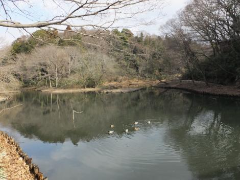 座間谷戸山公園・水鳥の池