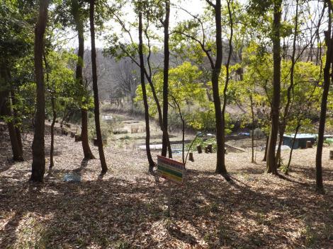 多摩丘陵の雑木林