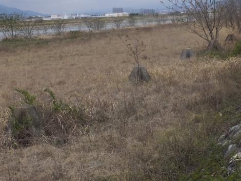 釜無川の菱牛・鏡中条橋付近