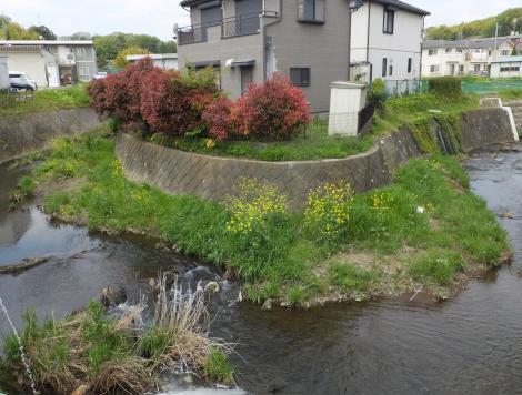 宮川橋上流の鶴見川