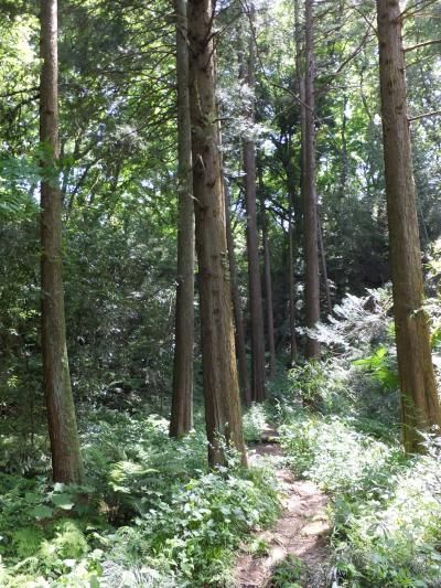 寺家ふるさとの森