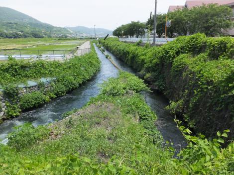 酒匂川左岸幹線用水路・武永田用水