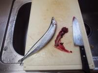 締めサンマの炙り刺身16