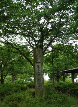 昭和山山頂