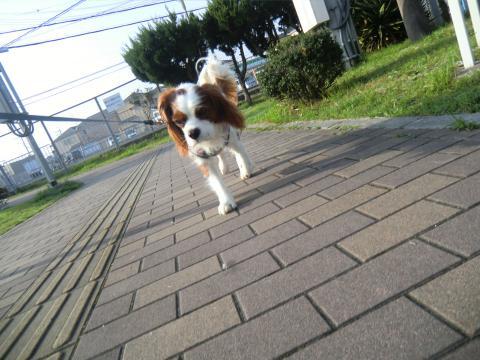 CIMG3463_convert_20150323095124.jpg