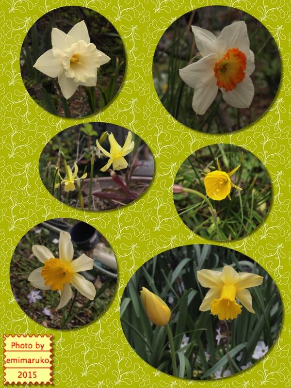 えみまるこの今日のひとりごと 春うらら 噂話しに 花が咲く