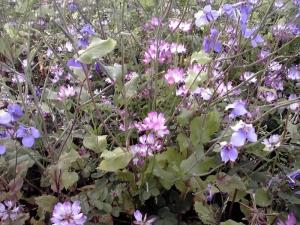 長居公園の自然の花