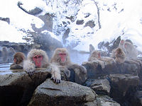 200px-Jigokudani_hotspring_in_Nagano_Japan_001.jpg