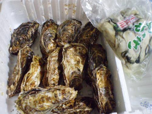 牡蠣殻つき