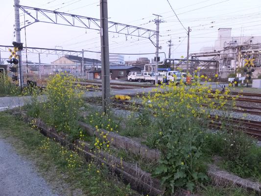 150322宮浦 (8)のコピー