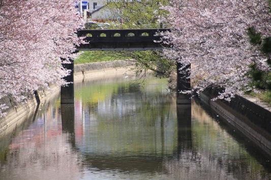 150329堂面川桜 (150)のコピー