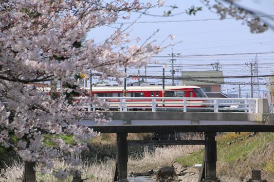 150329堂面川桜 (165)のコピー