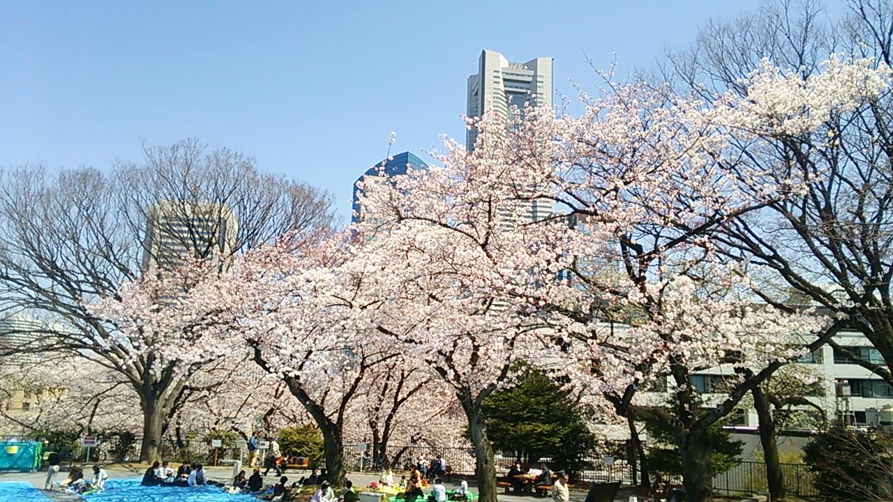 2015桜24