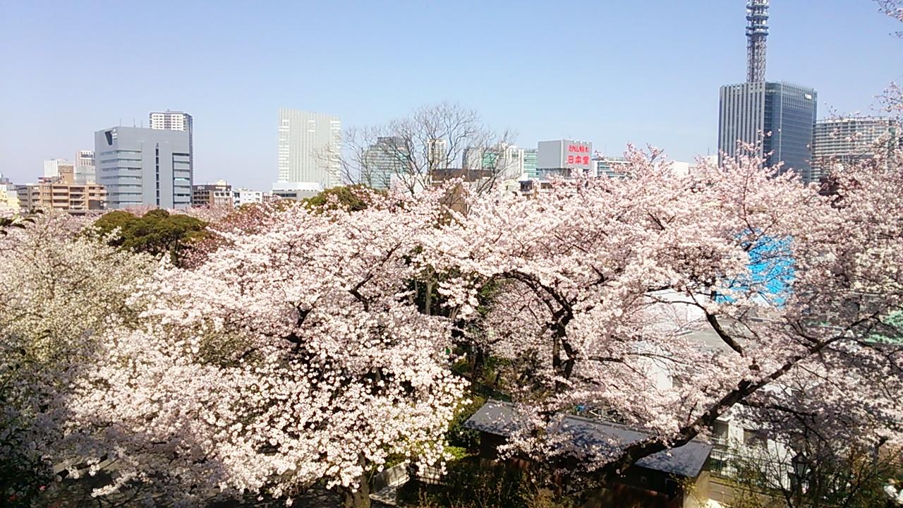 2015桜22