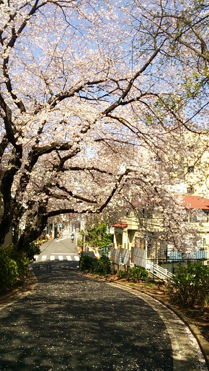 2015桜27