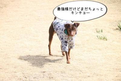 2015_03_21_9999_74.jpg
