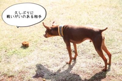 2015_04_26_9999_27.jpg