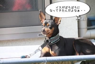 2015_04_26_9999_37.jpg