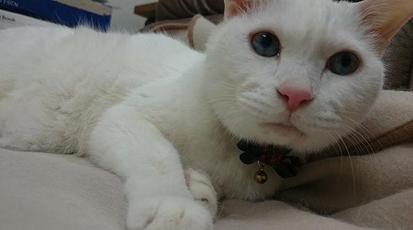 弊社の福招き猫