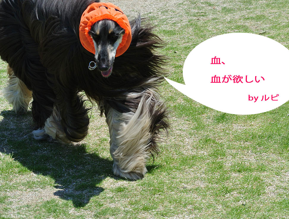 Photo2015_0531_21.jpg