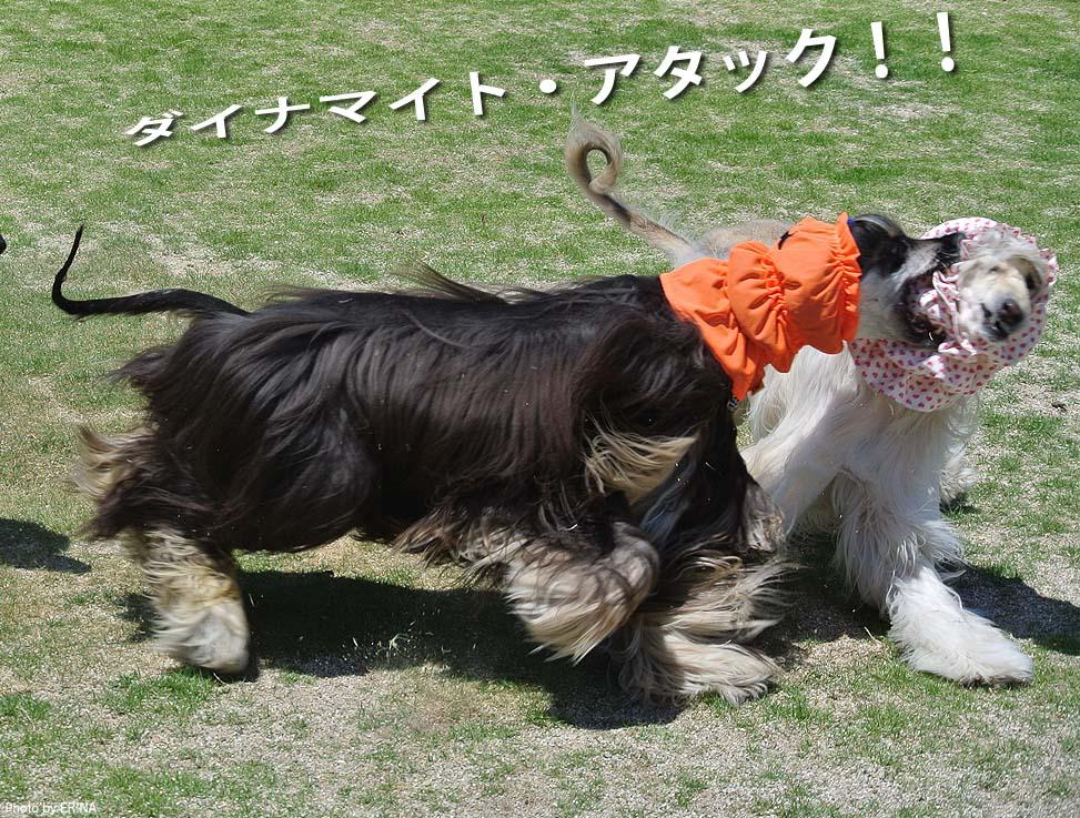 Photo2015_0531_27.jpg