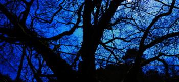 鬼一法眼古跡の樹