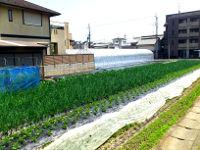 上賀茂の畑