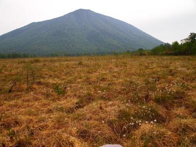 ワタスゲと男体山