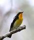 fourseasonsbird