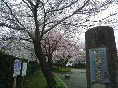 一本桜公園