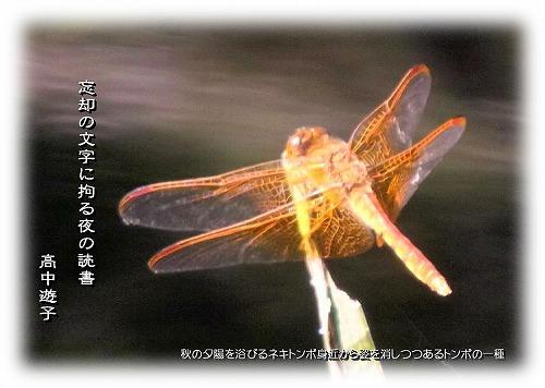 ku2433c.jpg